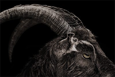 The Witch movie goat head